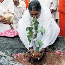 Amma pflanzt einen Baum